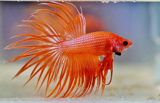 How to Properly Care for a Betta Fish