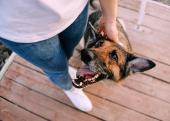Ways To Keep An Old Dog Happy And Healthy