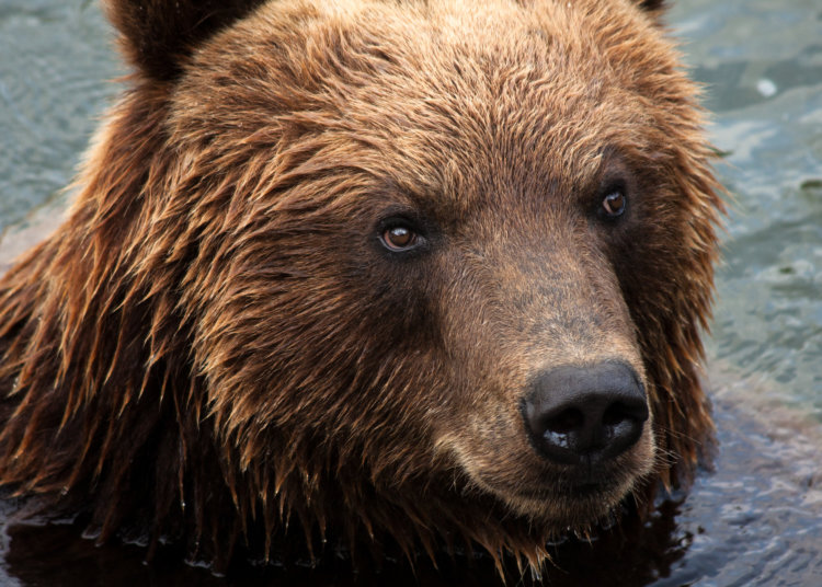 Alaska woman bear attacked